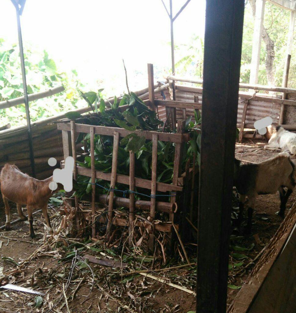 membeli kambing kurban, cara membeli kambing aqiqah, tips membeli kambing, beli kambing aqiqah, beli bibit kambing, beli bakalan kambing, cara membeli kambing, beli daging kambing segar, beli kambing qurban online, beli kambing ternak, aqiqah semarang, jasa aqiqah semarang, kambing aqiqah semarang, jual kambing aqiqah semarang, jual kambing qurban semarang, kambing qurban semarang, harga kambing idul adha, harga kambing buat idul adha, harga kambing untuk idul adha, harga kambing jelang idul adha, syarat kurban kambing idul adha, harga kambing menjelang idul adha, harga kambing saat idul adha,