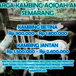 Harga Kambing Aqiqah Semarang